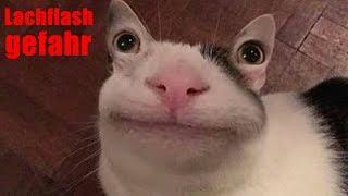 Meine Zuschauer haben mir Katzenbilder geschickt...