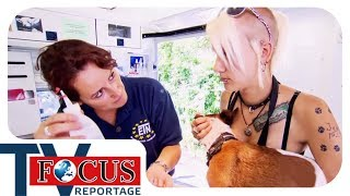 Ärztin der Straßenhunde - Focus TV Reportage