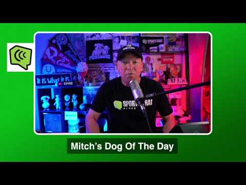 Mitch's Dog of the Day 10/31/20: Free College Football Betting Picks Predictions and Betting Tips