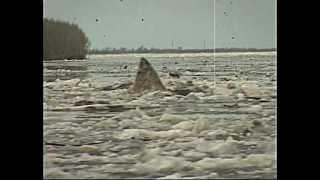 Нефтеюганская акула...тупой прикол...