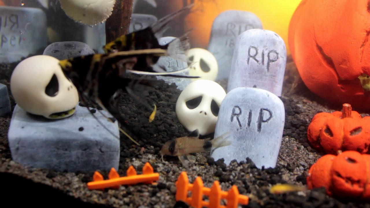 new fish halloween craft aquarium set up nightmare before christmas