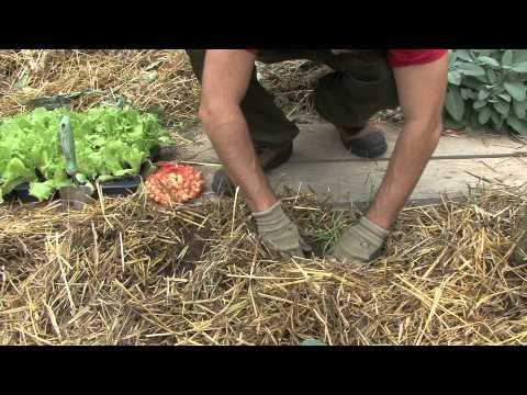 Come fare l 39 orto invernale consociazione seconda parte for Orto invernale