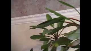 Хрущёвка, ремонт кухни. Широкие потолочные бордюры–2. Зеркальная розетка?..(Видео