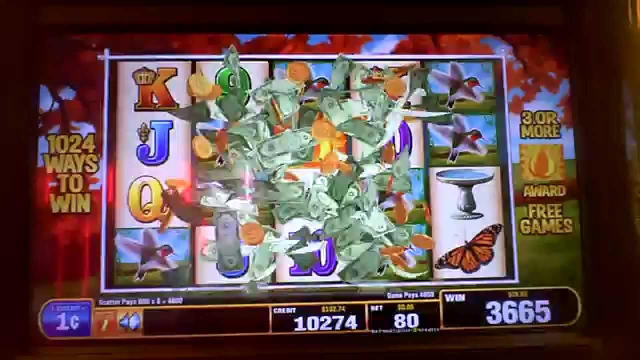 Hummingbird honey slot machine horse slots game