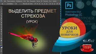 Урок 10 📢  Выделяем стрекозу - Select the dragonfly