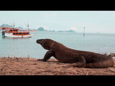 THE ISLAND OF KOMODO DRAGONS - INDONESIA