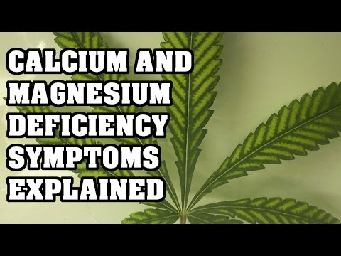Magnesium And Calcium Deficiency In Cannabis - YouTube