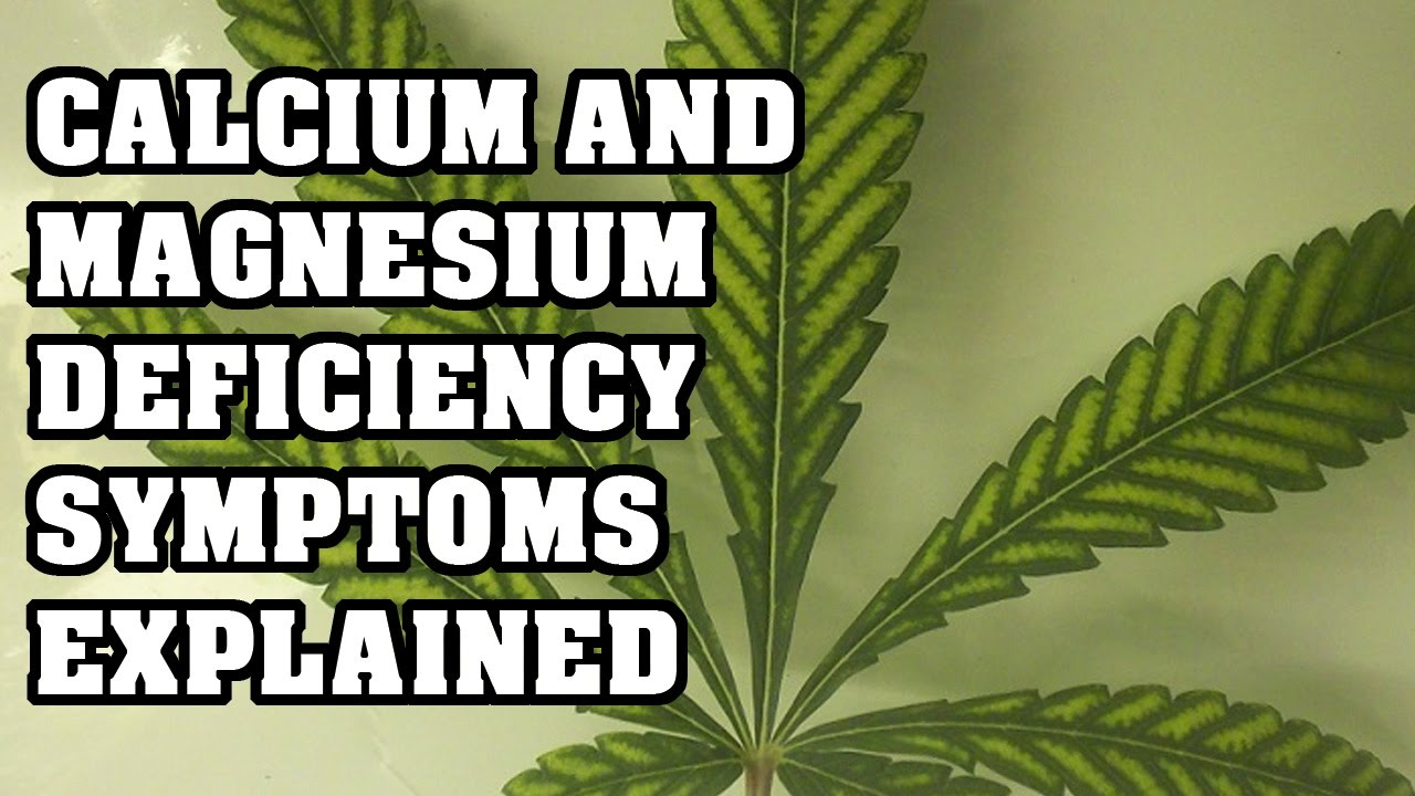 Magnesium And Calcium Deficiency In Plants Explained Youtube