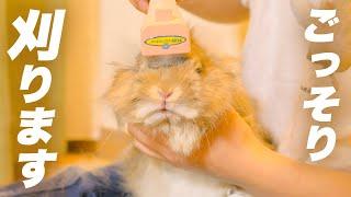 バリカンでウサギのタテガミを刈りたい。No.242
