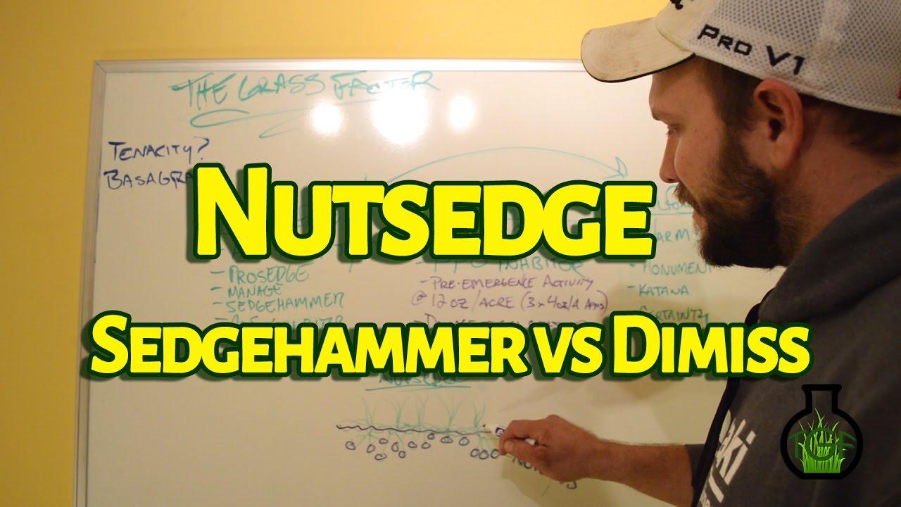 Nutsedge Sedgehammer Vs Dismiss The Gr Factor