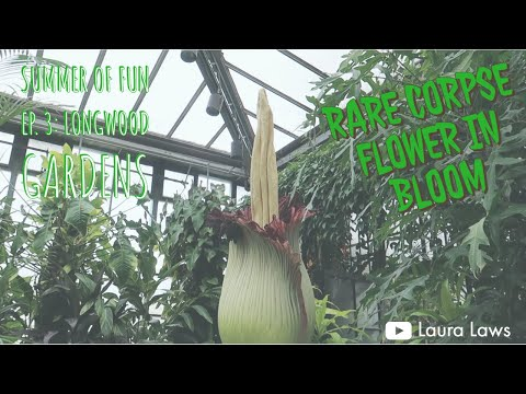 Trip To Longwood Gardens To See The Corpse Flower Summer Of Fun Episode 3 Youtube