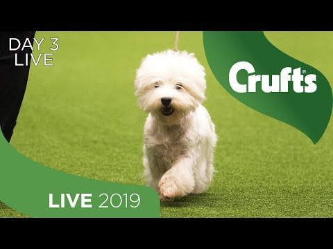 Day 3 LIVE | Crufts 2019