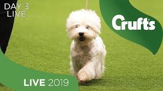 day-3-live-crufts-2019