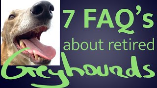7 most Frequently Ask Questions before adopting a retired Greyhounds