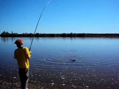 pesca de carpas en viedma Travel Video