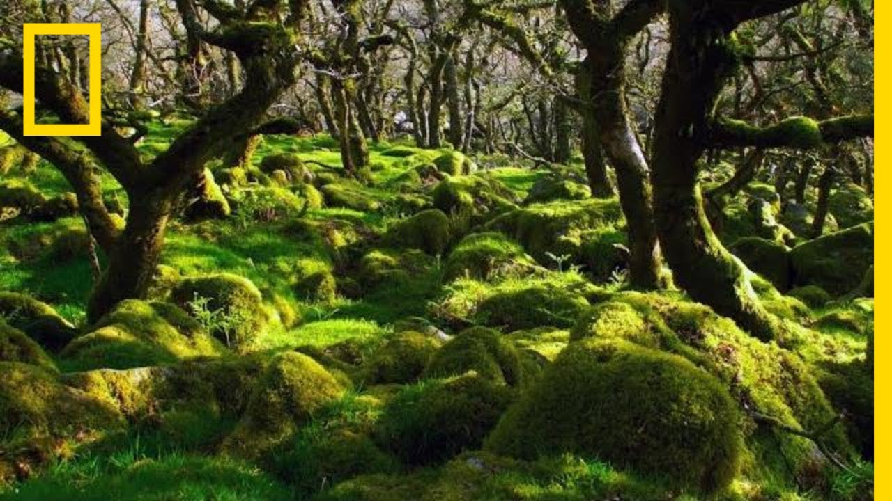 Thousands of Years Ago, This Was a Forest. See What Remains | Short Film Showcase