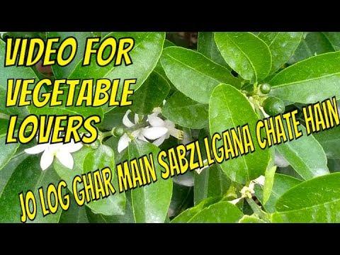 Vegetable Gardening K Lye Kya Kya Zaroori Baatain Hain