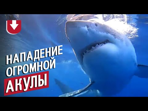 Акула-людоед напала на дайверов!