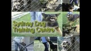 Sydney Dog Training Guard Work