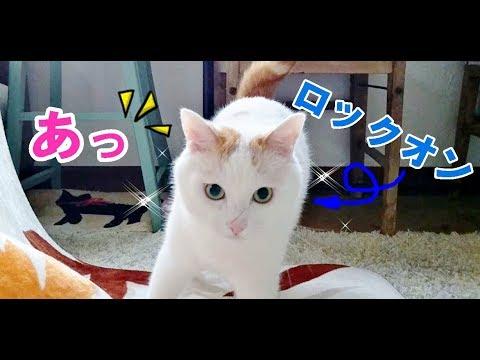 ママの片付けを邪魔する猫がかわいい