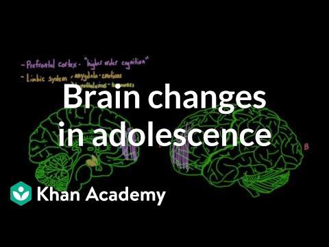 Brain changes during adolescence   Behavior   MCAT   Khan Academy