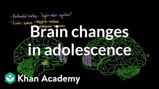 brain changes during adolescence behavior mcat khan academy
