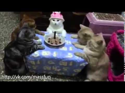 Коты праздную день рождения