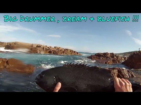 DRUMMER , BREAM & BLUEFISH