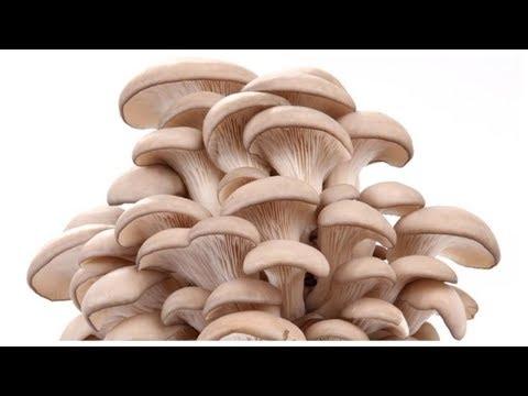 купить гриб вешенка оренбург