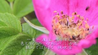 作詞:幸斉たけし 作曲:新沼謙治 編曲:石倉重信 歌手:新沼謙治 2015/...