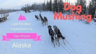 Dog Mushing in Two Rivers, Alaska