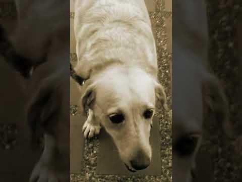 Lucia y jennifer😆😆😆😆modelo de perros