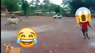 Cow playing football match in Goa. Funny fails