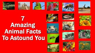 7 Amazing Animal Facts To Astound You