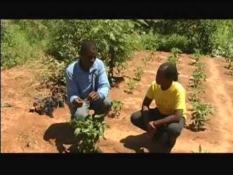 Third year final production - Sunseed Tanzania Trust