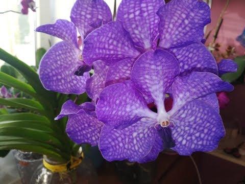 Орхидеи! Подробный уход за орхидеей вандой по просьбам подписчиков🌸🌸🌸