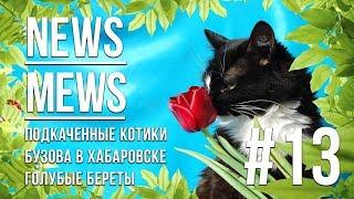 News Mews #13. Междупородный женский день