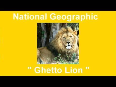 Download Ghetto Lion 😜Random Vid😜( David & Raina Spates )