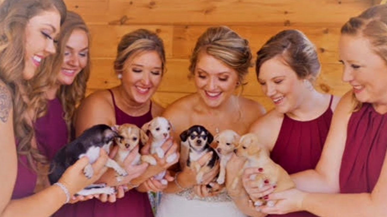 Bridesmaids Carry Rescue Puppies Instead of Flowers While ...