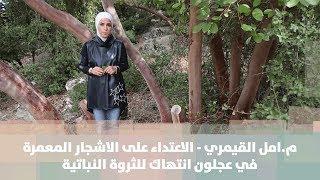 م.امل القيمري - الاعتداء على الاشجار المعمرة في عجلون انتهاك للثروة النباتية