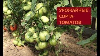 видео Сорта томатов для теплицы описание с фото