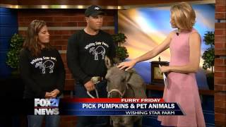 Wishing Star Farms offers farm activities, petting zoo, pumpkins