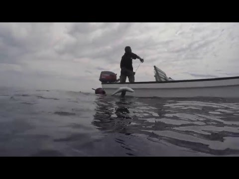 Spearfishing - Solomon Islands