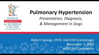 Pulmonary hypertension: Presentation, Diagnosis, and Management in Dogs