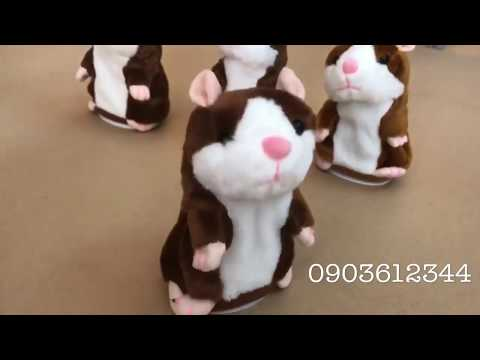 Chuột Hamster biết nói - talking hamster