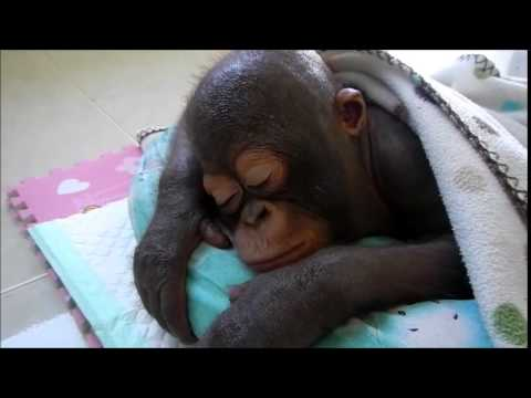 Budi falls straight to sleep after a heavy physiotherapy session