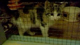 Котенок плачет, просится удочерится +ласковый котик + другие кошечки приюта ищут дом. спб