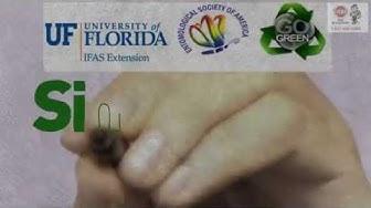 Flea Control: Fleas Pest Control in  WESTON, FL