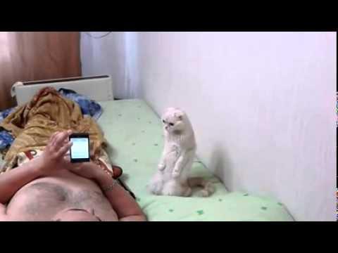 Реакция кота на гимн...