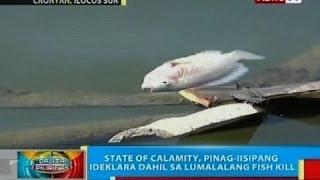State of calamity, pinag-iisipang ideklara sa Caoayan, Ilocos Sur dahil sa lumalalang fish kill